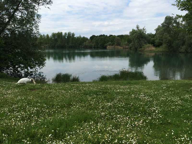 FKK in Rastatt: Baggersee Wintersdorf - Impressionen